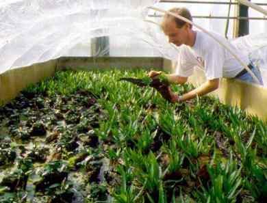 Размножение растений. Подробно о размножении