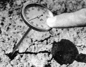 Температура почвы и растения