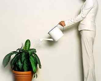 Сколько нужно воды для растений?